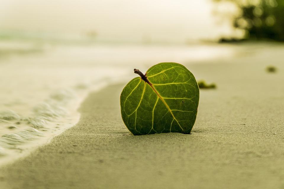 Playa, De La Hoja, Verde, Naturaleza, Verano