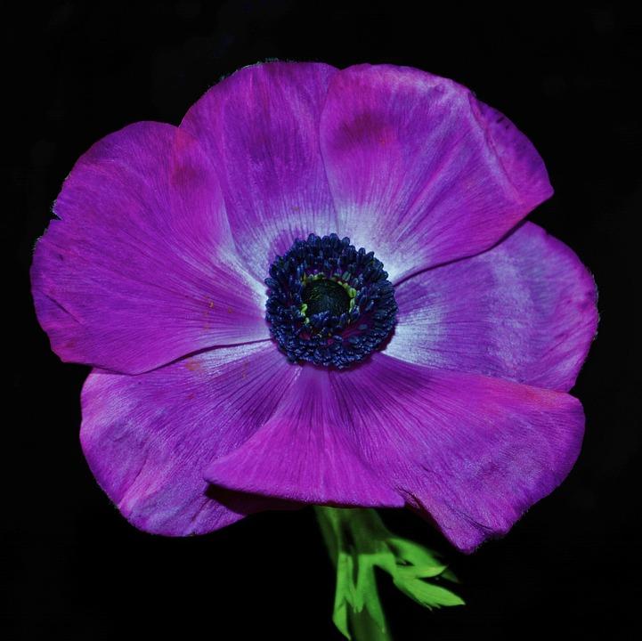 free photo purple flower, flower, petals, open  free image on, Natural flower