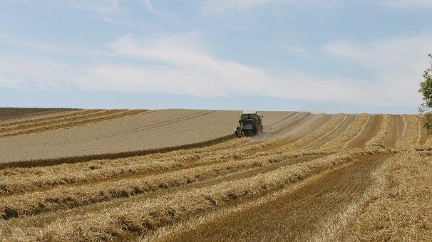 Тамбовская область намолотила 1 млн т зерна, убрана треть площадей