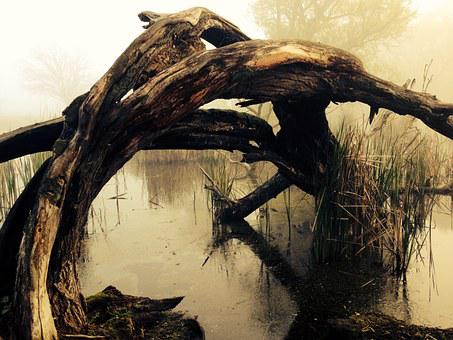 Marsh, Tribe, Lake, Bark, Tree, Nature