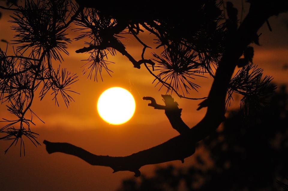 日没, オレンジ, 枝, 夏, 夜, ツリー, 夕暮れ, ミステリー, 暖かい
