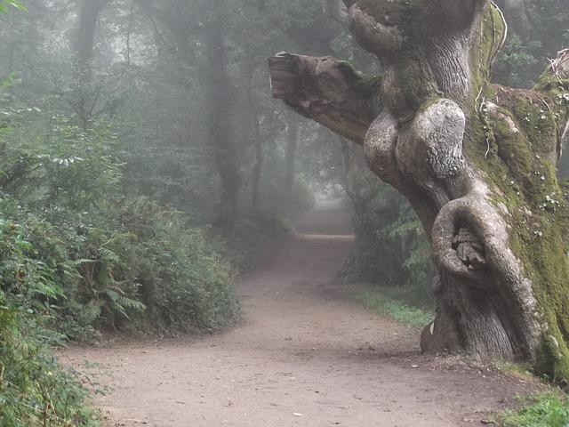 Free Photo Misty Fog Path Tree Forest Free Image On