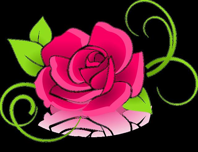 Rosa Gráfico Flor · Gráfico Vetorial Grátis No Pixabay