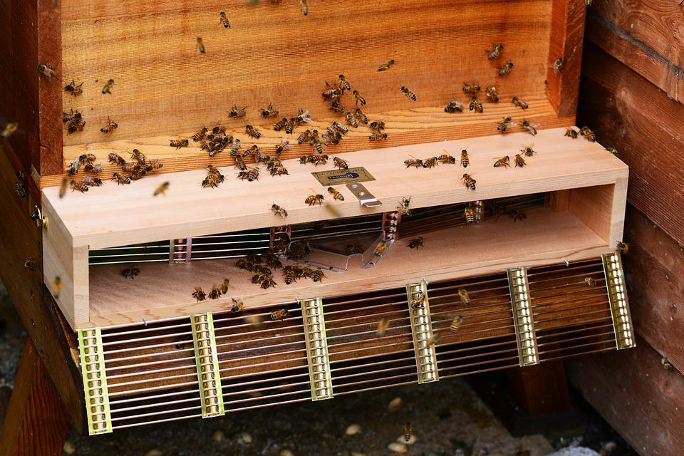 Honey Bee Swarm Trap Bees Hive Cedar Wood