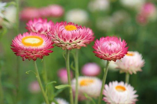 花, 花草原, 夏, 牧草地, 自然, フローラ, ブルーム, 工場, 野生の花