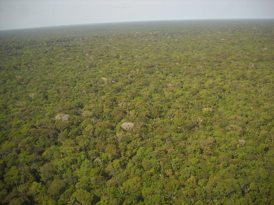 Brazylia, Amazonka, Las Równikowy, Zielony, Flora