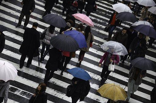 人, 雨, 忙しい, 日本, 大阪, 傘, ウェット, 歩行者, 道路, 交差点