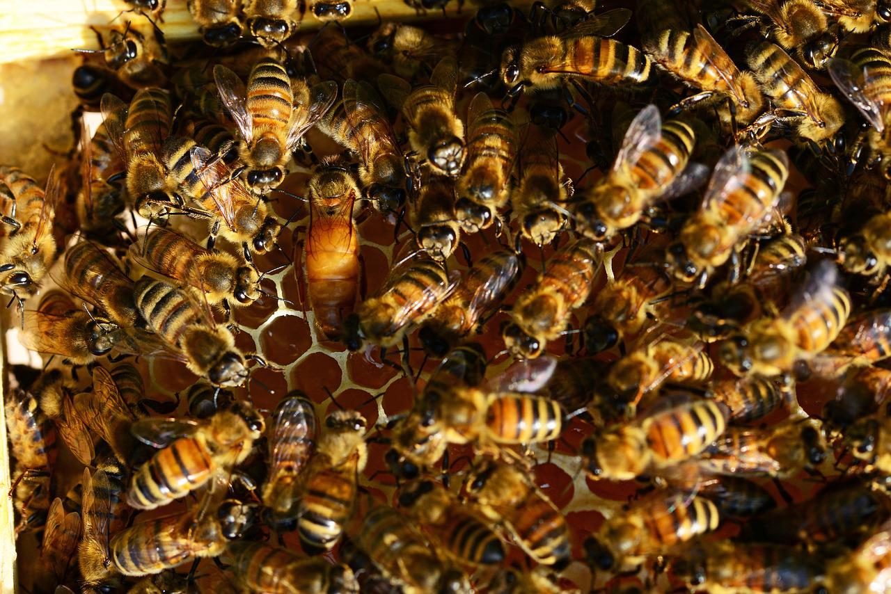 from where i sit essays on bees beekeeping and science Honey bee origins, evolution & diversity – ashleigh only likely to be achieved by selective breeding on a broad front of bees of a single race the native bee.