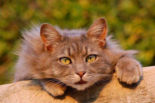Katze, Katzen, Pelzig, Haustier, Hautnah