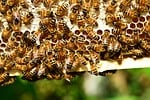 bees, hive