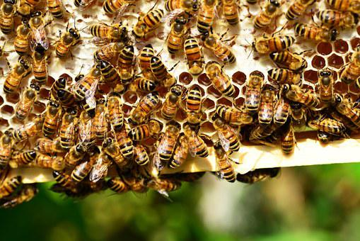 Honey Bees Bees Hive Bee Hive Insects Yell