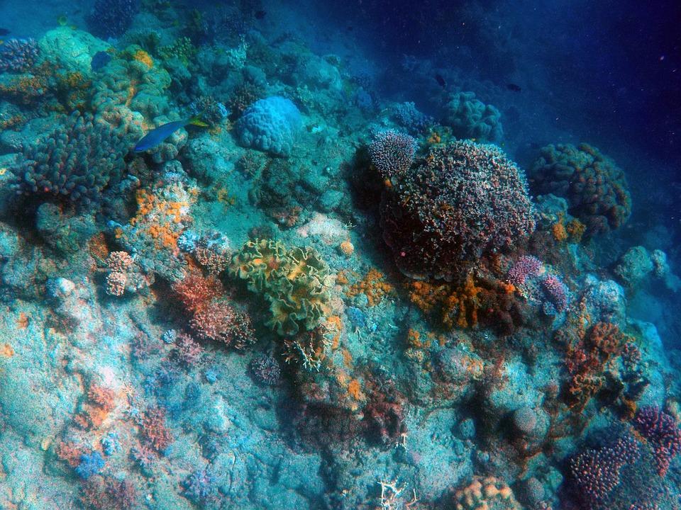 Under The Sea Deep Sea Fish Ocean 401521