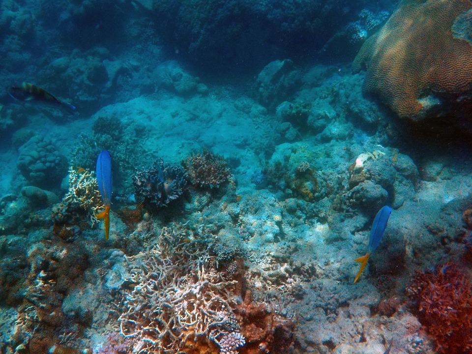 Under The Sea Deep Sea Fish Ocean 401534