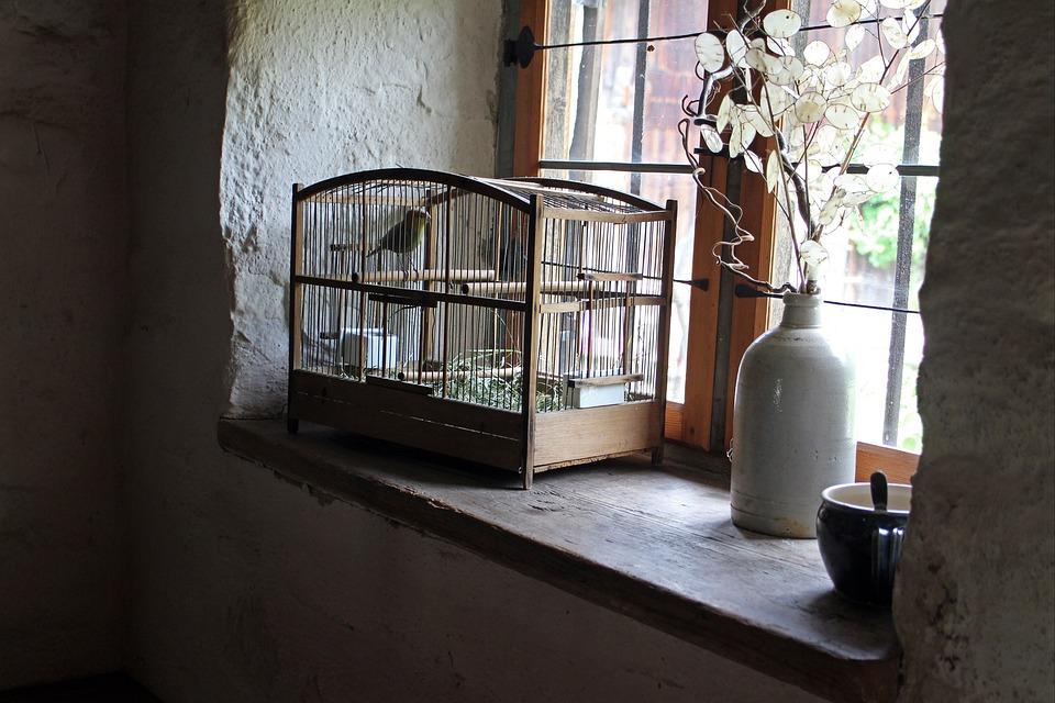 Jaula De Pájaro, Cage, Alféizar De La Ventana, Aves