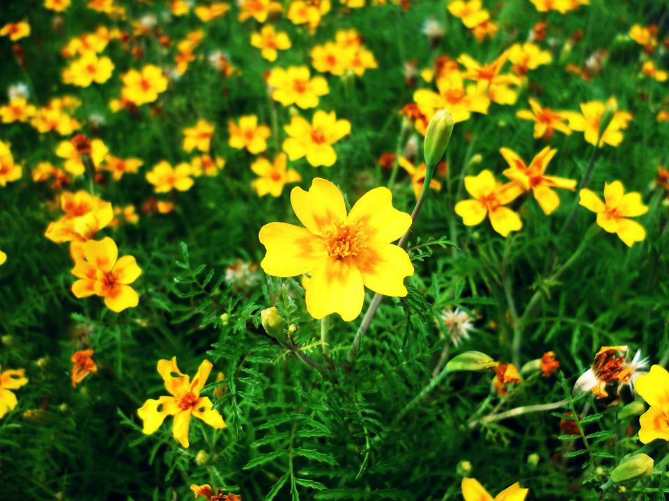 Flower meadow flowers yellow free photo on pixabay flower meadow flowers yellow meadow bloom flora mightylinksfo