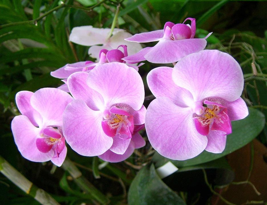 kostenloses foto orchidee blume pflanze natur kostenloses bild auf pixabay 402321. Black Bedroom Furniture Sets. Home Design Ideas