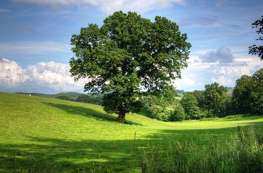 Tree Oak Landscape View Field Scenic Count