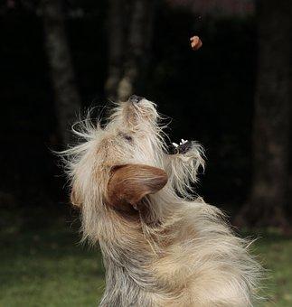 Dog, Eat, Animal, Pet, Fur, Wuschelig