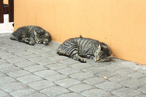 猫, 子猫, 毛布, 動物, 毛皮, ペット, Tomcat, 魅力的です