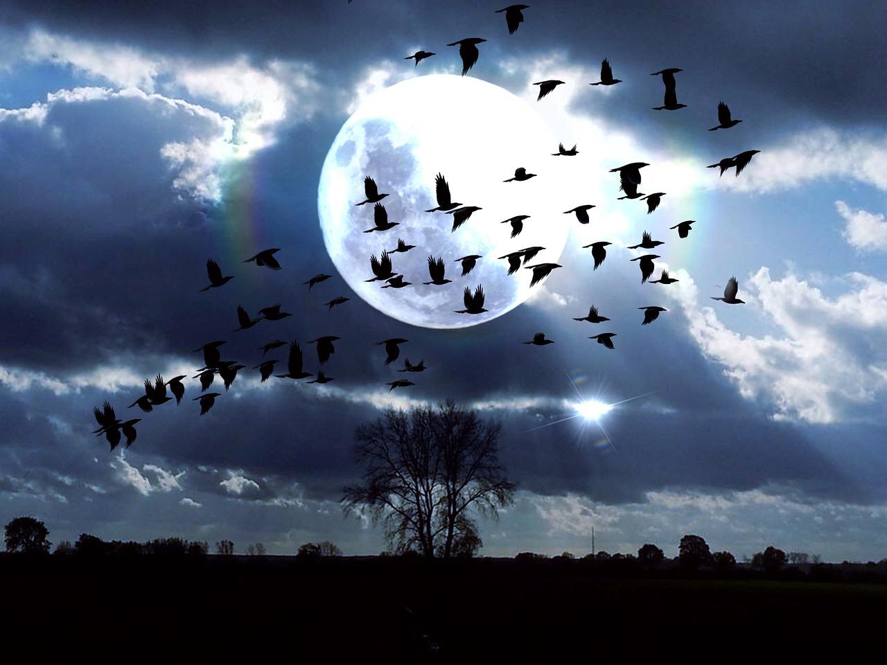 николаевна птицы в ночном небе картинки футболках проверенный