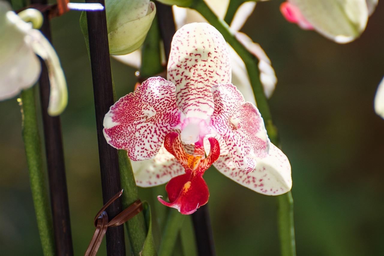 фото орхидей в тунисе засушливой погоде грибковым