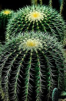 Cactus Plant Circles Nature Green Flower N
