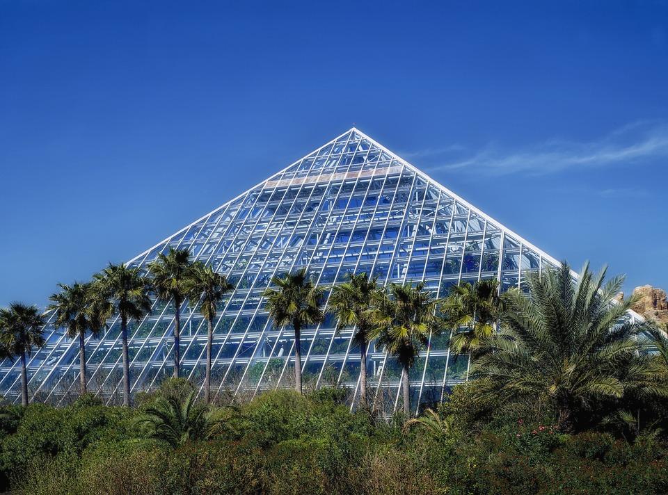 Galveston Texas Moody Gardens Palm Trees