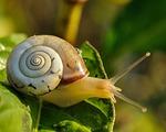 snail, slow