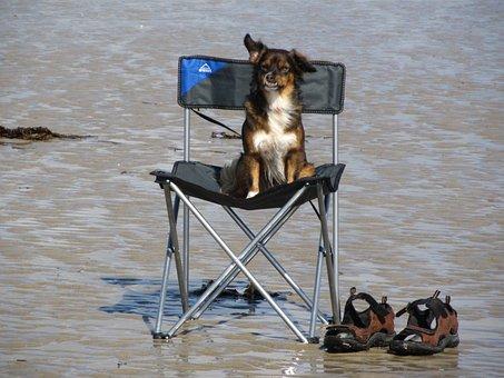 Hund, Meer, Strand, Urlaub, Ruhe, Warten, Campingstuhl