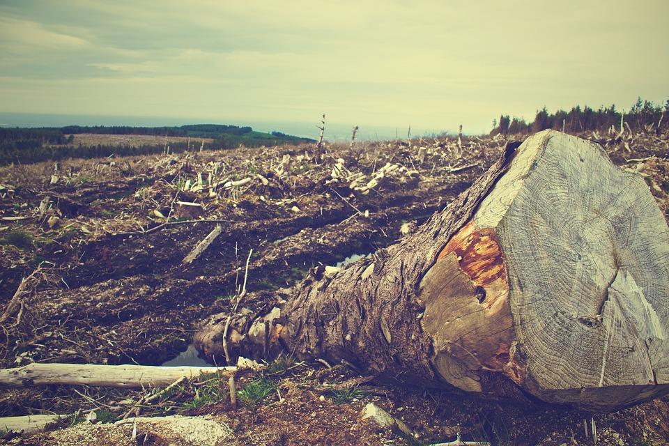 破壊 森林 なぜ森林を守るの?地球温暖化と森林伐採