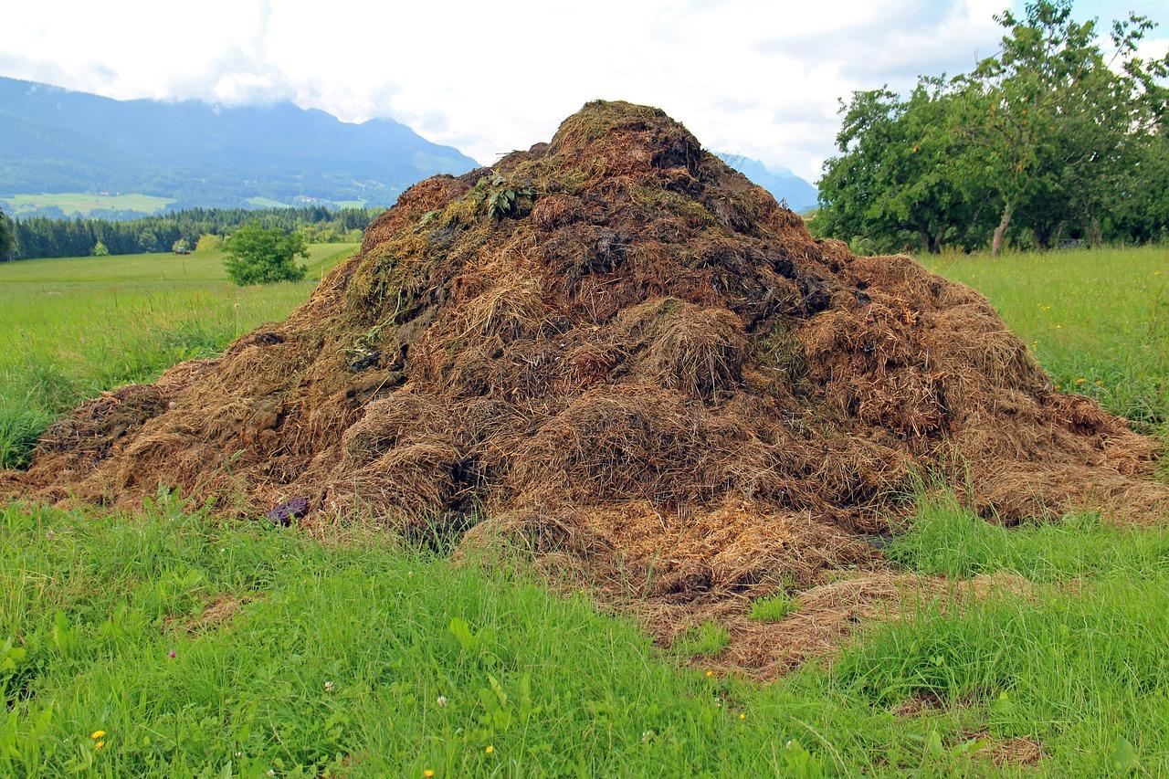 Как правильно применять органические удобрения - навоз и перегной?