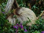 sloth, rest, sleep