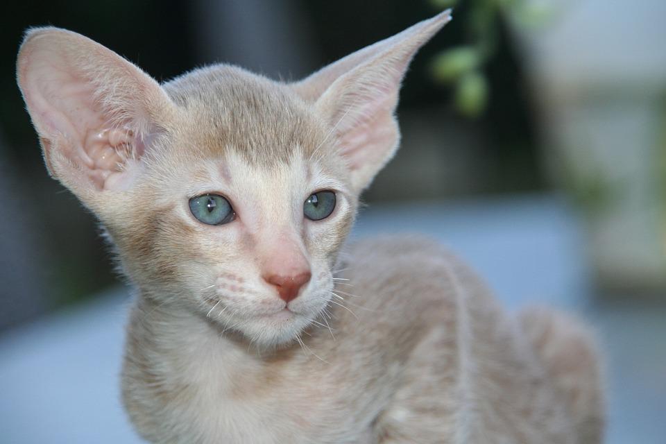 Photo gratuite cat chaton b b chat image gratuite sur pixabay 408806 - Photo de bebe chat ...