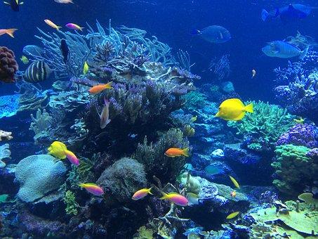 Underwater, Fish, Tropical, Ocean