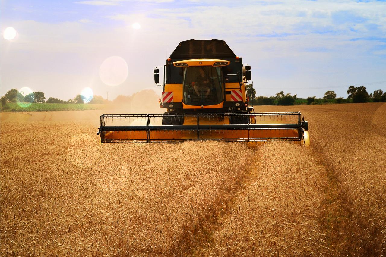уборка пшеницы комбайнами картинки мивины вареной колбасой