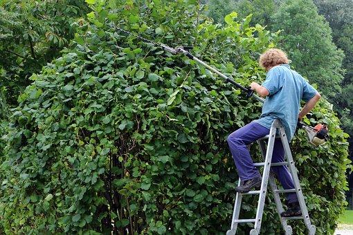 Jardinier Paysagiste, Jardinier