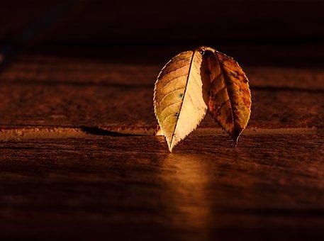 Folha, Outono, Sunrise, Hora De Ouro