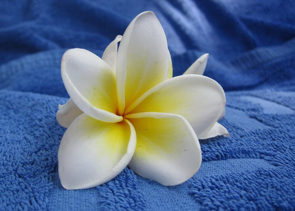 Flower, Towel, White, Blue, Summer, Inflorescence
