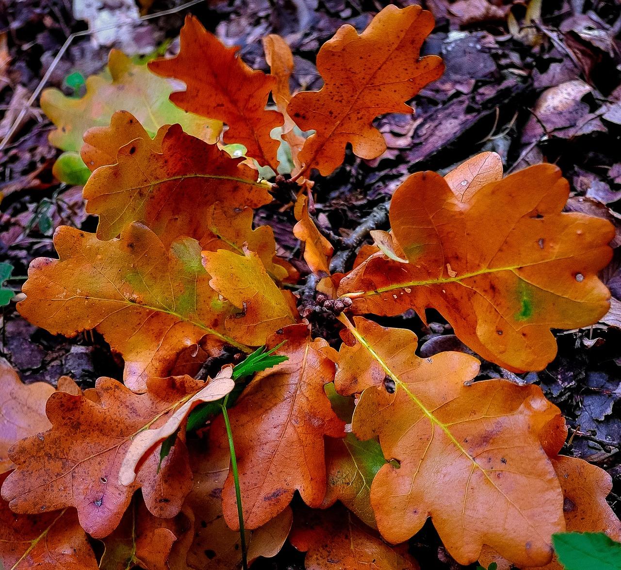 личных блогах какого цвета листья дуба летом фото умело подчеркивает