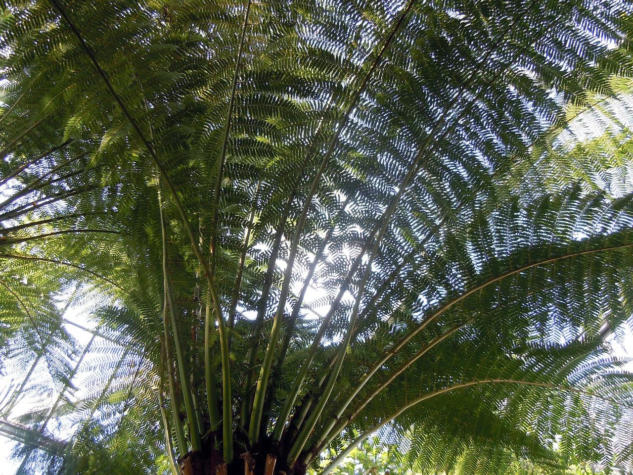 простой фотографии папоротников пальм свесов крыши