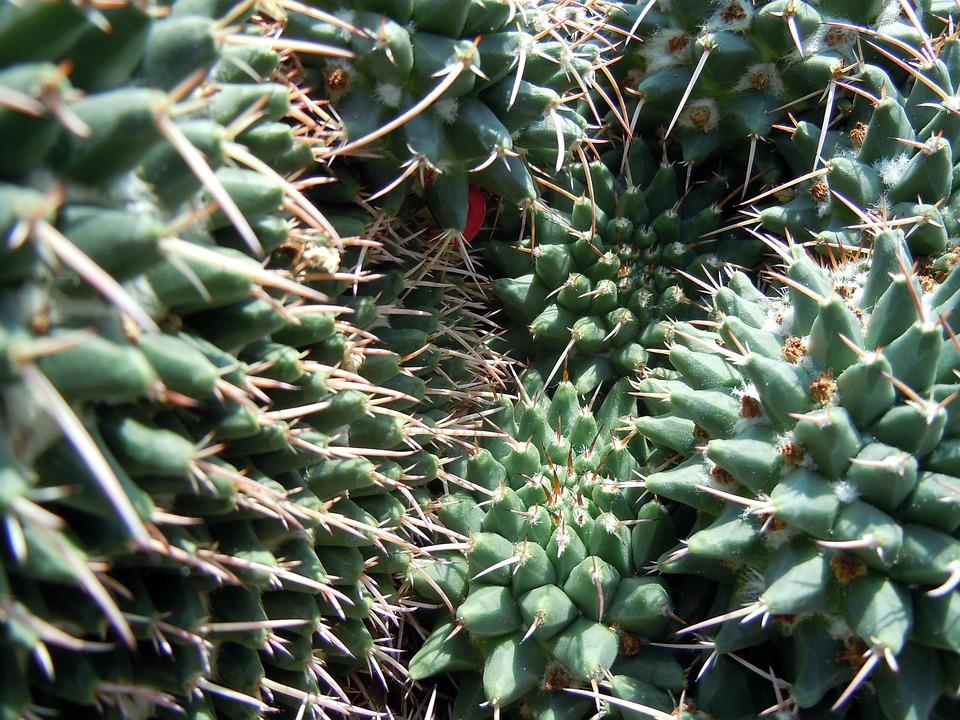 kostenloses foto kaktus kakteen stacheln pflanzen kostenloses bild auf pixabay 412291. Black Bedroom Furniture Sets. Home Design Ideas