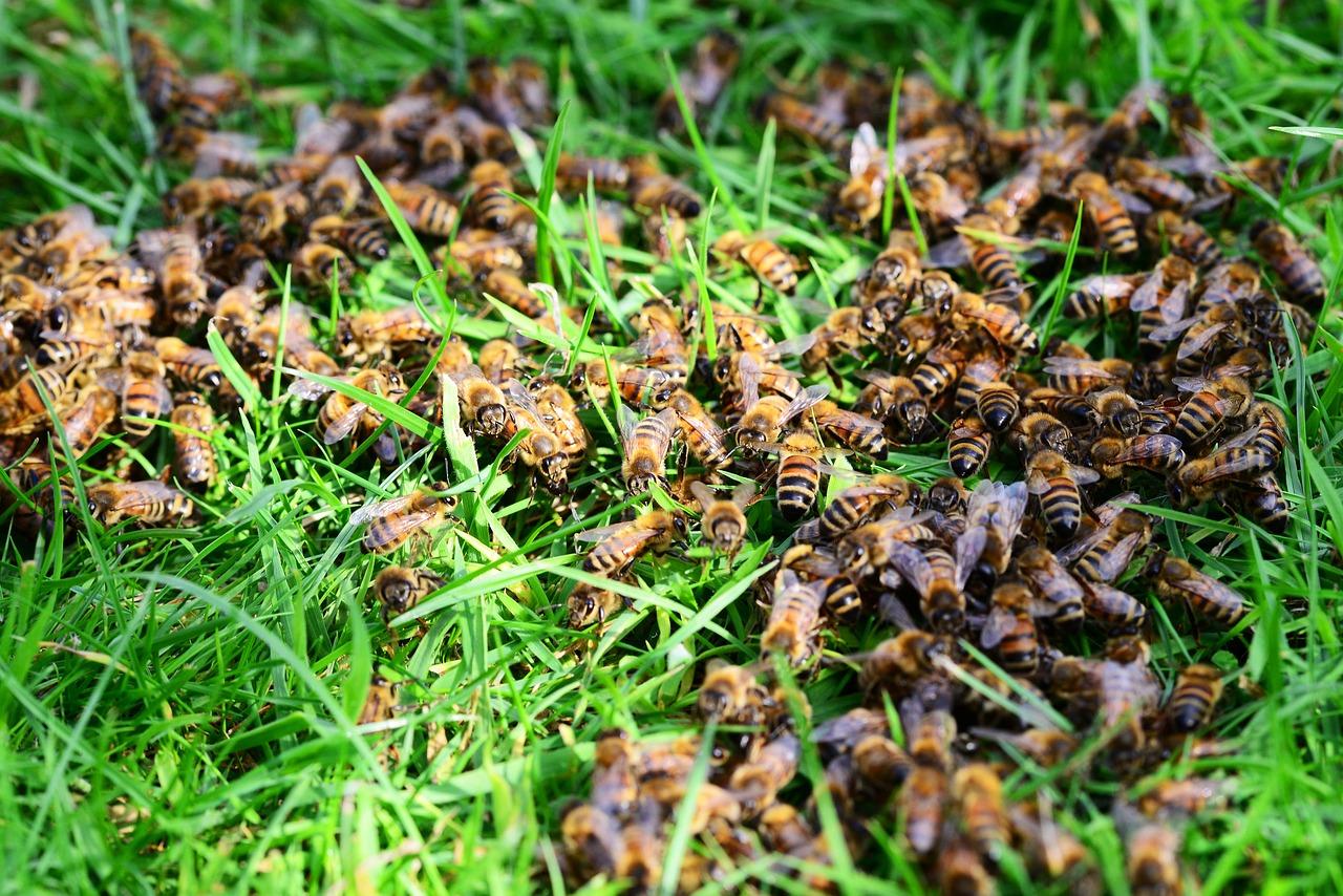 сожалению, мед пчел земляных фото свое фото