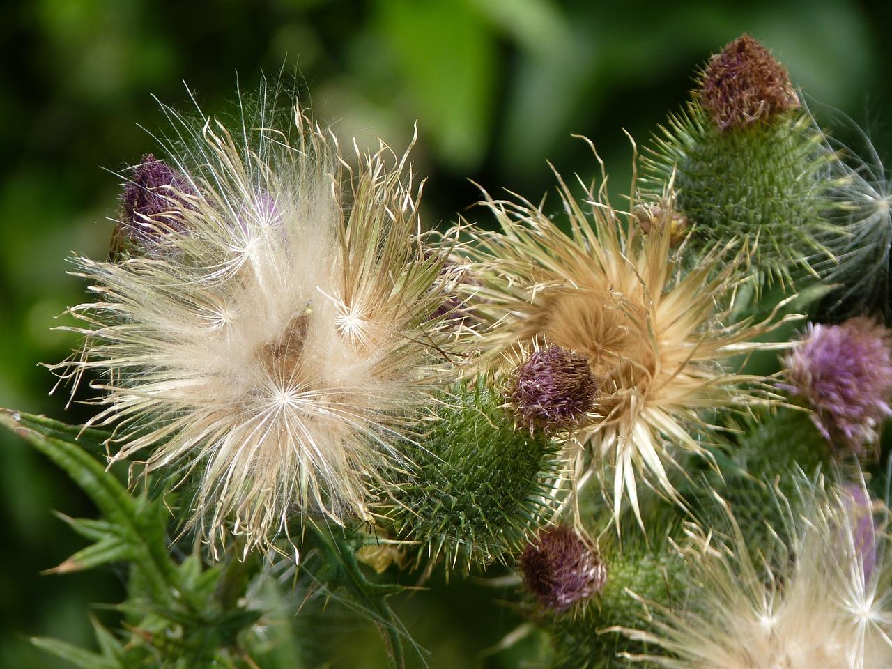 Hairy plants