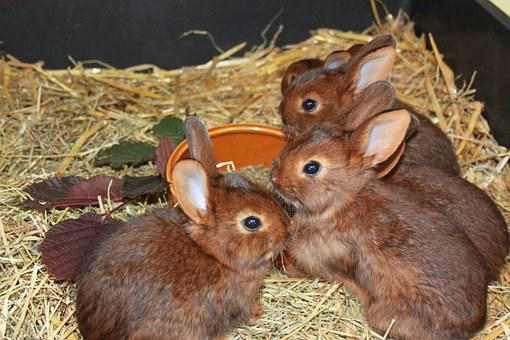 Rabbit, Deilenaar, Rabbit Family