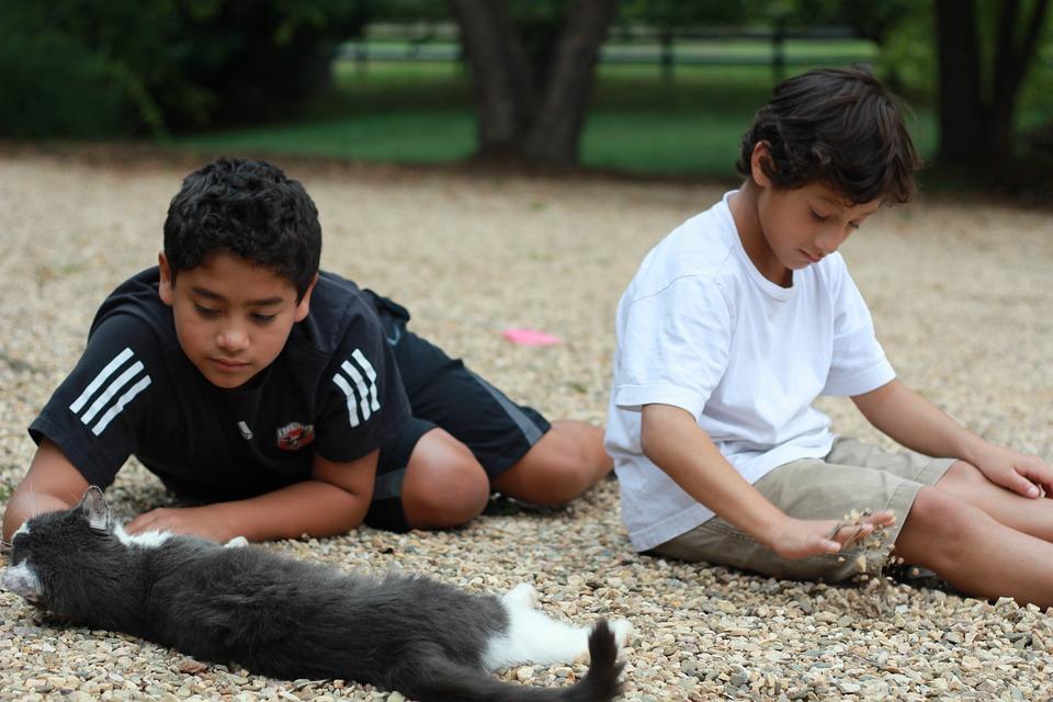 Caricias, Niños, Hermanos, Mascota, Gato, Verano, Grava