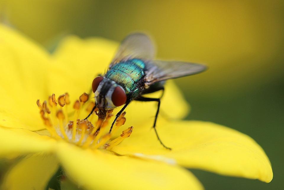 к чему снится убивать мух