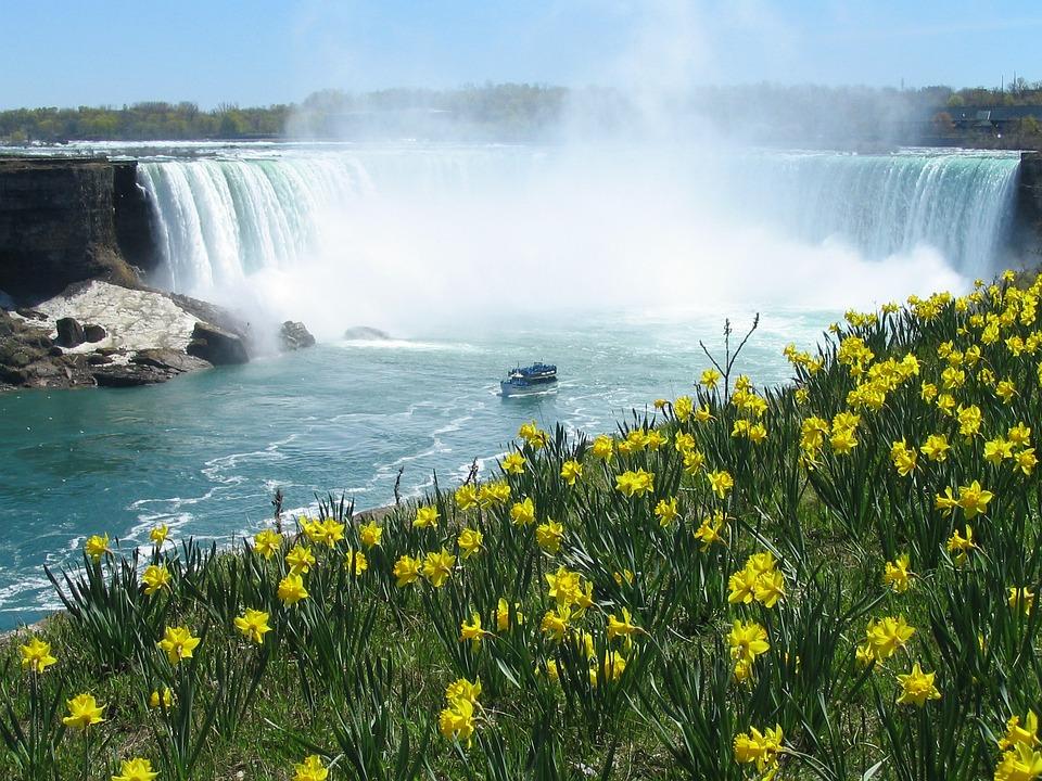 Photograph of Niagara Falls and Daffodils