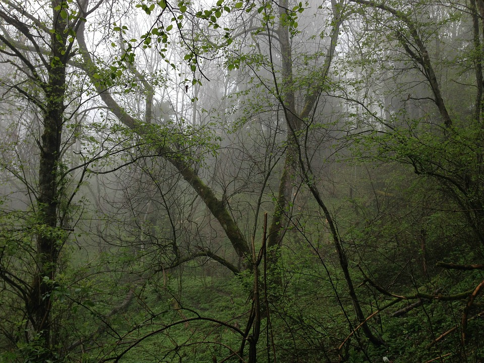 Forest, Rain, Mountain Forest, Jungle, Nature, Tree