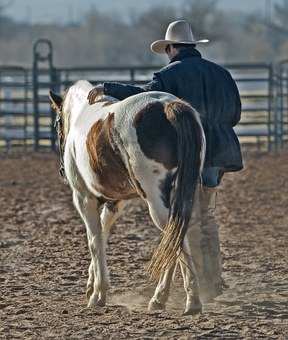 Cow Boy Cheval Poney Western Des Animaux R