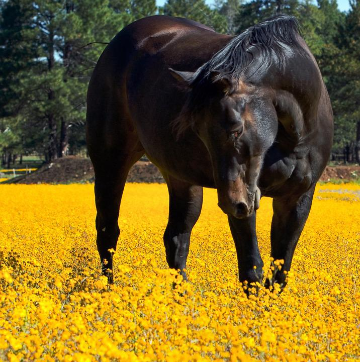 horses and flowers wallpaper - photo #18